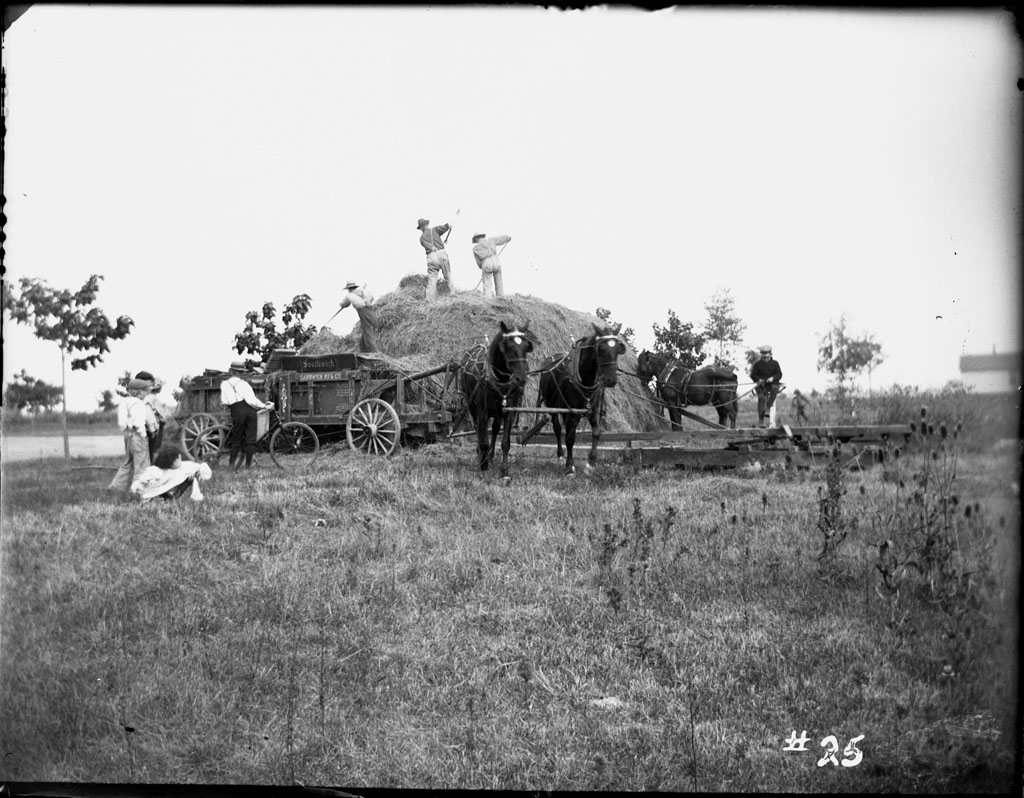 Farmers pitch hay on a Detroit farm. Agriculture accounted for the bulk of Michigan's economy in the mid-19th century.