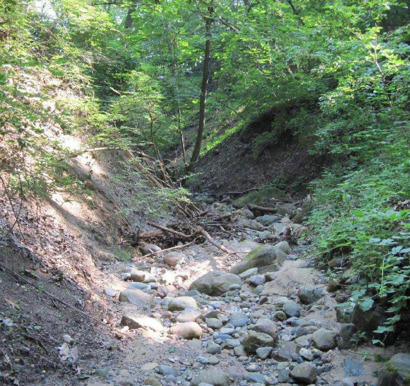 Erosion rocks & invasives in Glen